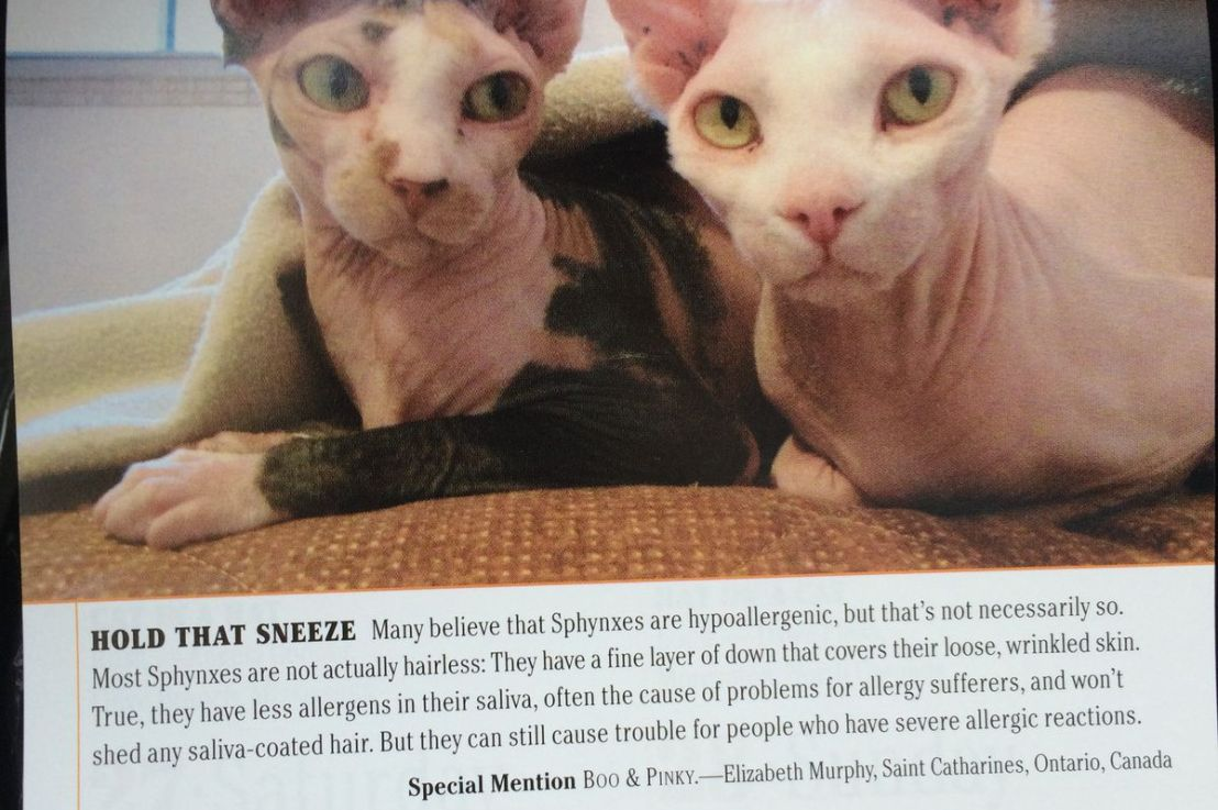 My Cats AreFamous!!!
