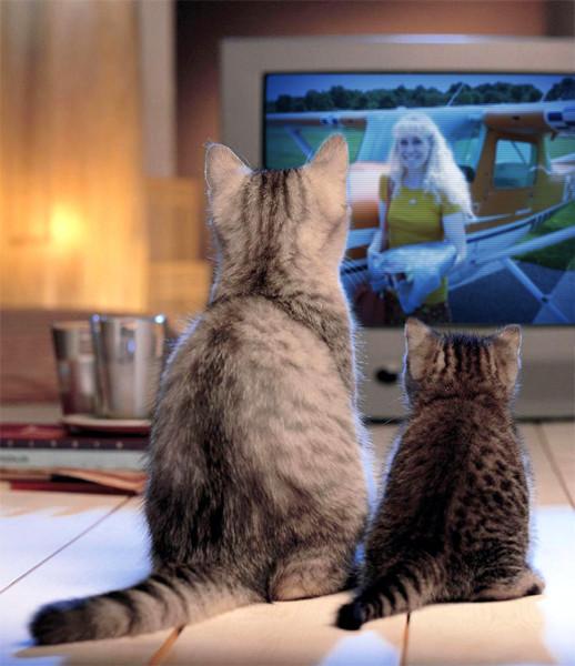 photofunia-two-cats-regular-2016-08-31-04-26-12